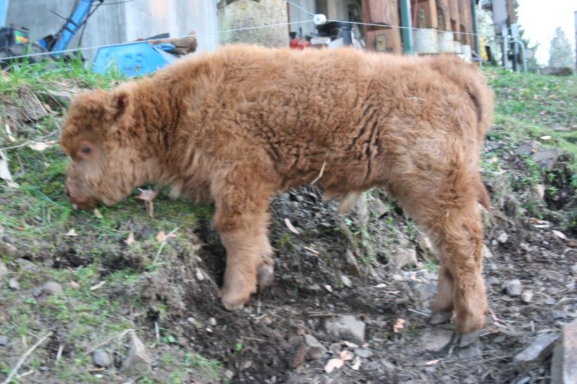 Name for the bull calf born Feb. 6th 2014
